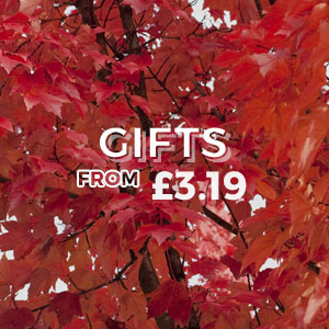 Gifts - From £3.19